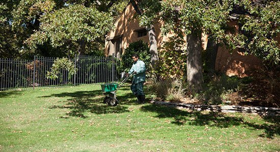 Man Fertilizing a lawn