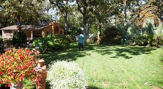 Man doing weed control on a lawn