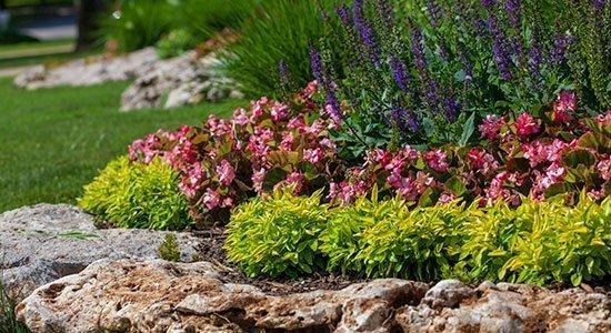 a landscaped garden