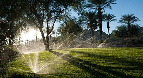 irrigation in a commercial field