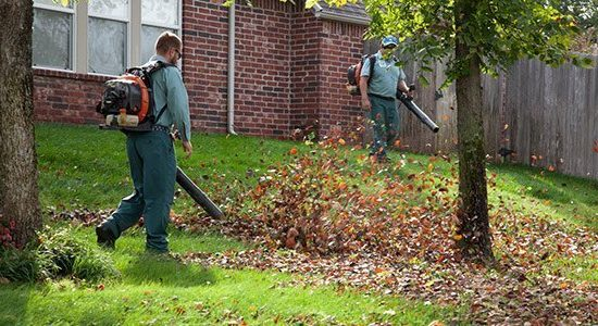 removing leaves from your lawn