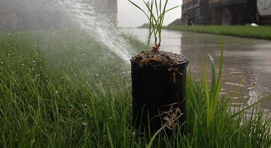 sprinkler spraying on a plant