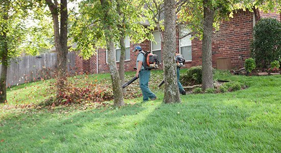 yardvarks leaf removal service