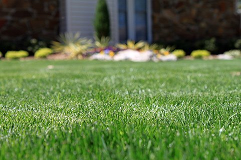 yardvarks fescue overseeding program